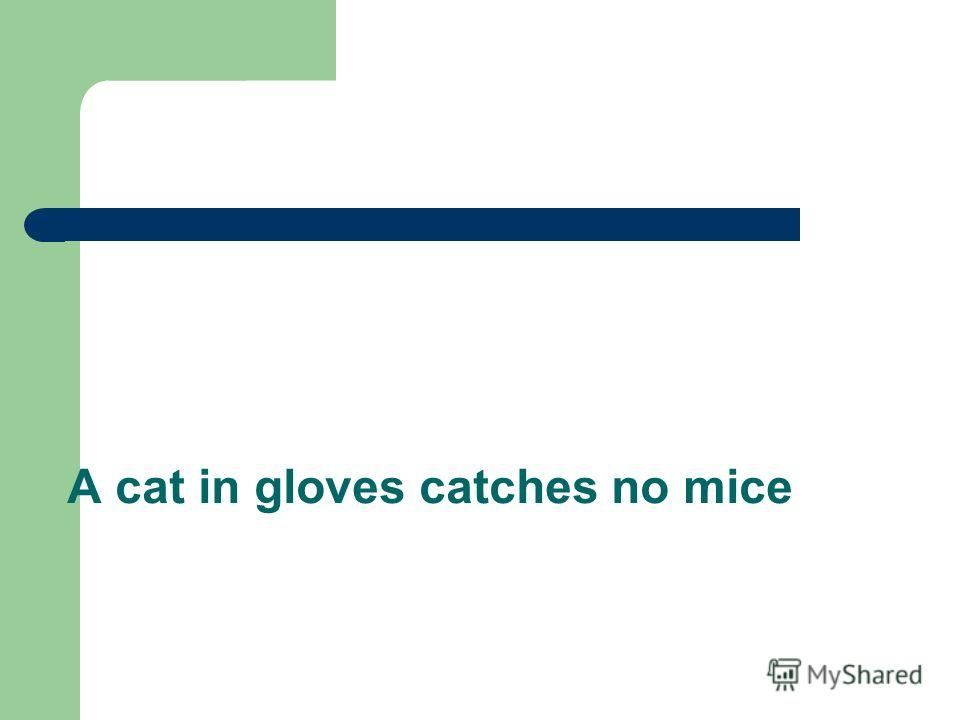 A cat in gloves catches no mice