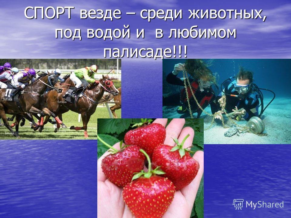 СПОРТ везде – среди животных, под водой и в любимом палисаде!!!