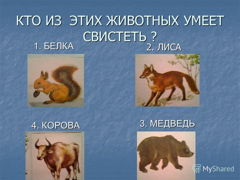 КТО ИЗ ЭТИХ ЖИВОТНЫХ УМЕЕТ СВИСТЕТЬ ? 2. ЛИСА 2. ЛИСА 3. МЕДВЕДЬ 3. МЕДВЕДЬ 4. КОРОВА 4. КОРОВА 1. БЕЛКА