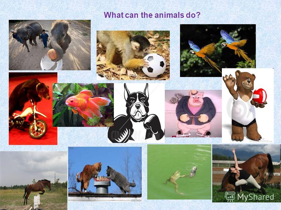 What can the animals do?