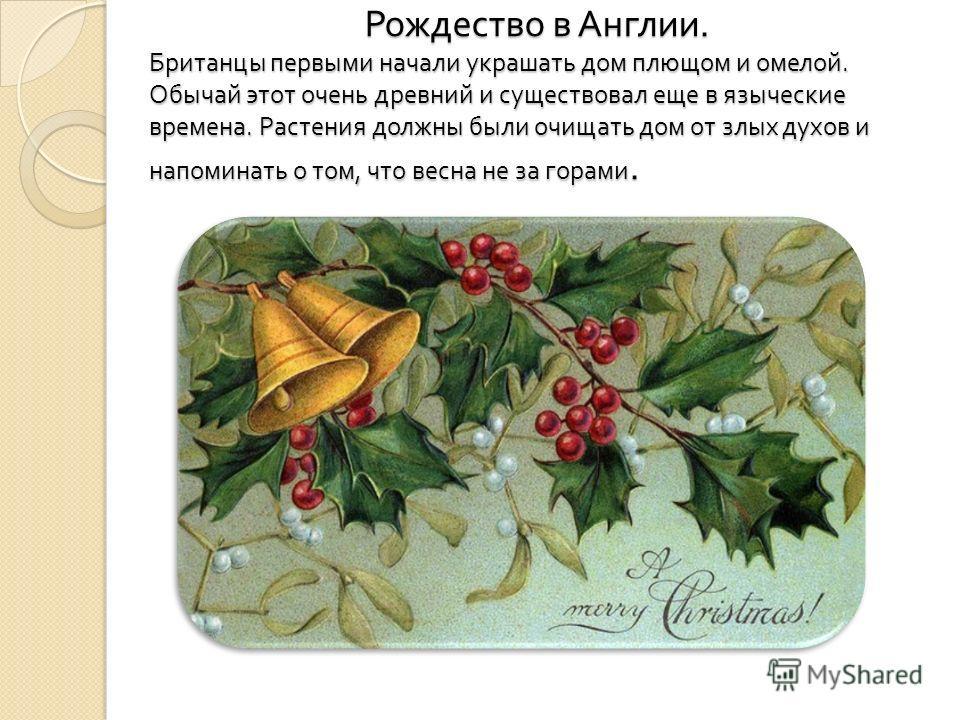 Рождество в Англии. Британцы первыми начали украшать дом плющом и омелой. Обычай этот очень древний и существовал еще в языческие времена. Растения должны были очищать дом от злых духов и напоминать о том, что весна не за горами. Рождество в Англии.