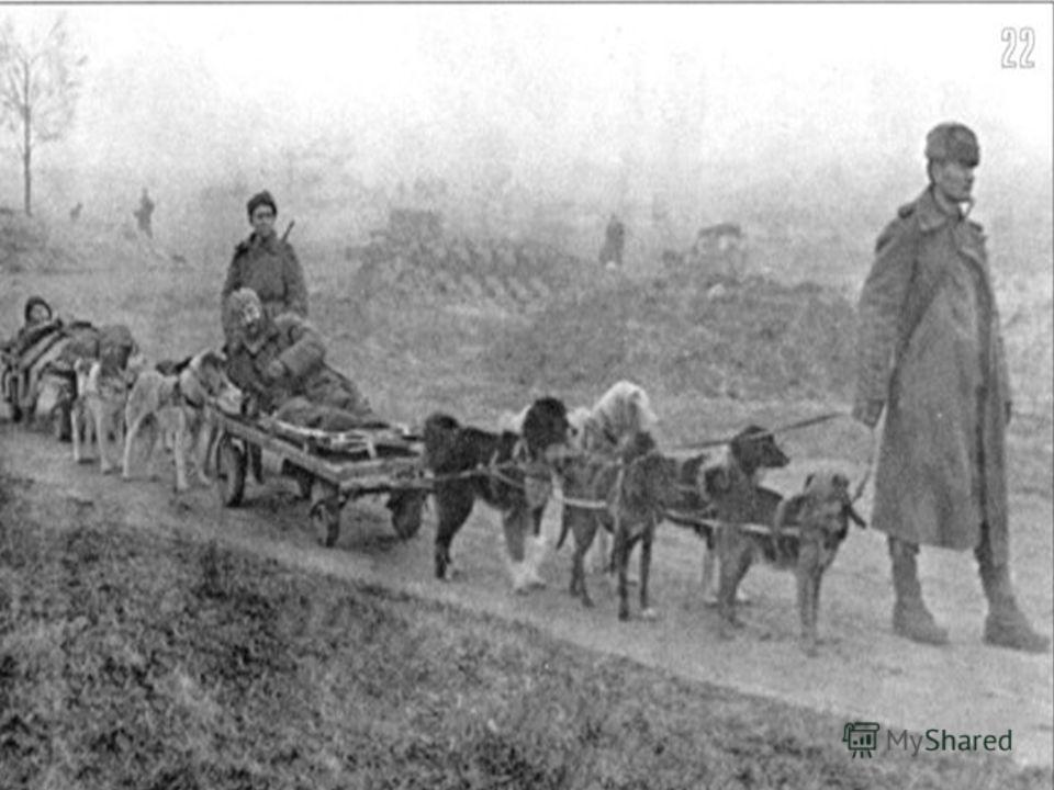 Собаки-санитары искали раненых, на спине перевозили медикаменты, перевязочный материал.