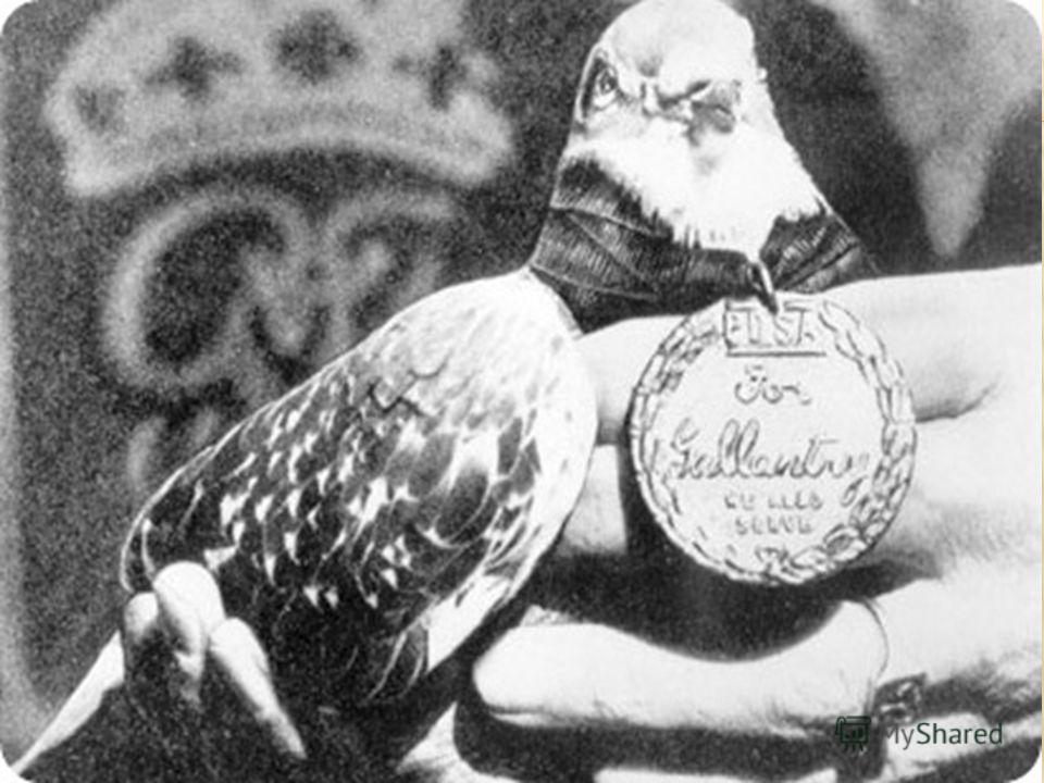 Голубиные налеты подавляюще действовали на психику солдат и офицеров вермахта. Долгое время птицы и звери, совершившие героические поступки, не получали каких- либо почестей. И только в 1943 году Мария Дикин (известная английская основоположница благ