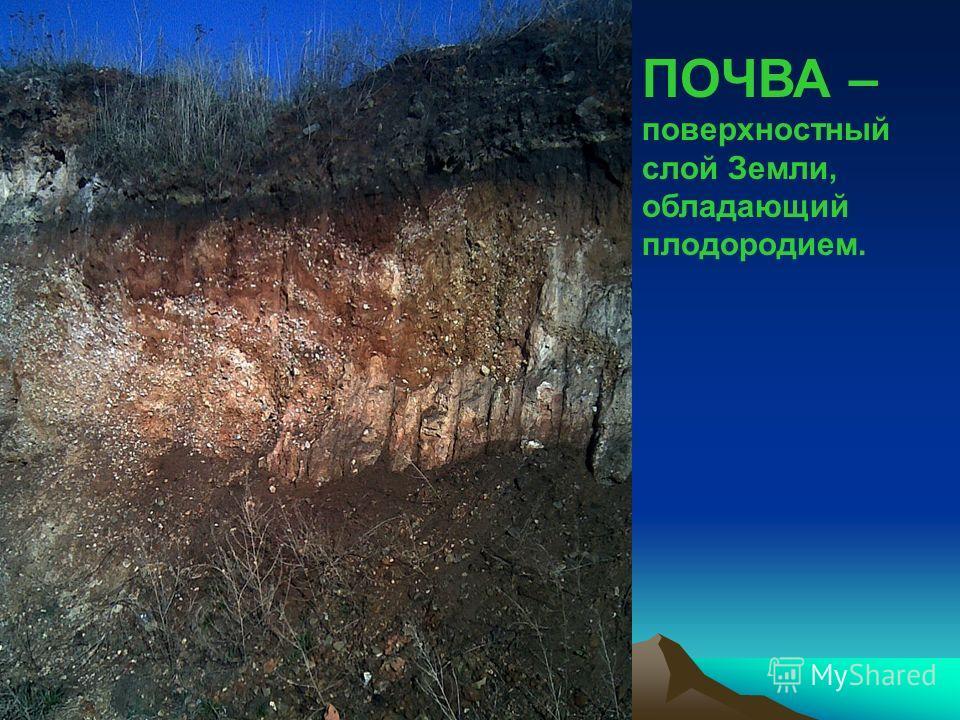 Презентация на тему Отчёт по полевой практике ТЕМА  2 ПОЧВА поверхностный слой Земли обладающий плодородием