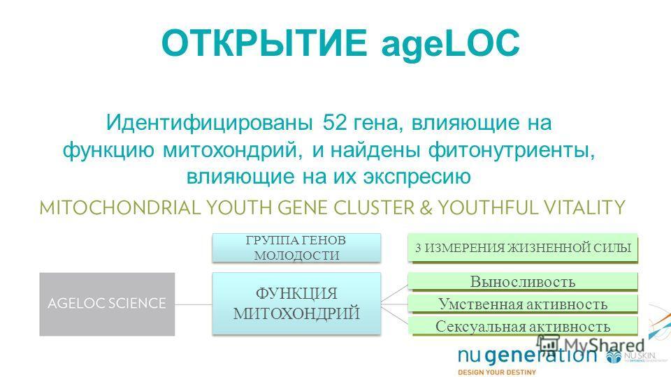 ОТКРЫТИЕ ageLOC Идентифицированы 52 гена, влияющие на функцию митохондрий, и найдены фитонутриенты, влияющие на их экспресию ГРУППА ГЕНОВ МОЛОДОСТИ ФУНКЦИЯ МИТОХОНДРИЙ 3 ИЗМЕРЕНИЯ ЖИЗНЕННОЙ СИЛЫ Выносливость Умственная активность Сексуальная активнос