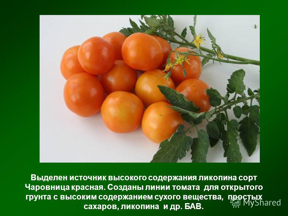 Выделен источник высокого содержания ликопина сорт Чаровница красная. Созданы линии томата для открытого грунта с высоким содержанием сухого вещества, простых сахаров, ликопина и др. БАВ.