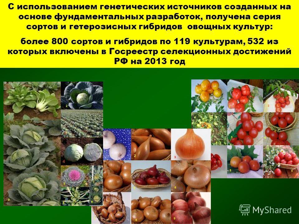 С использованием генетических источников созданных на основе фундаментальных разработок, получена серия сортов и гетерозисных гибридов овощных культур: более 800 сортов и гибридов по 119 культурам, 532 из которых включены в Госреестр селекционных дос