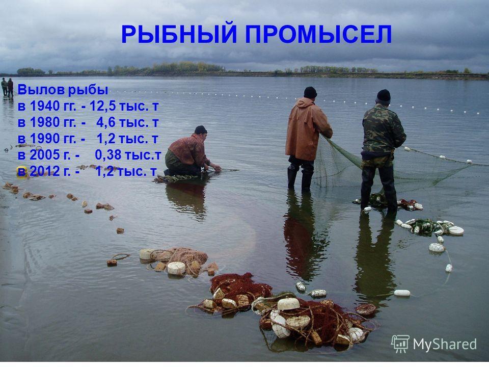 РЫБНЫЙ ПРОМЫСЕЛ Вылов рыбы в 1940 гг. - 12,5 тыс. т в 1980 гг. - 4,6 тыс. т в 1990 гг. - 1,2 тыс. т в 2005 г. - 0,38 тыс.т в 2012 г. - 1,2 тыс. т