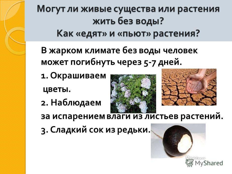 Могут ли живые существа или растения жить без воды ? Как « едят » и « пьют » растения ? В жарком климате без воды человек может погибнуть через 5-7 дней. 1. Окрашиваем цветы. 2. Наблюдаем за испарением влаги из листьев растений. 3. Сладкий сок из ред
