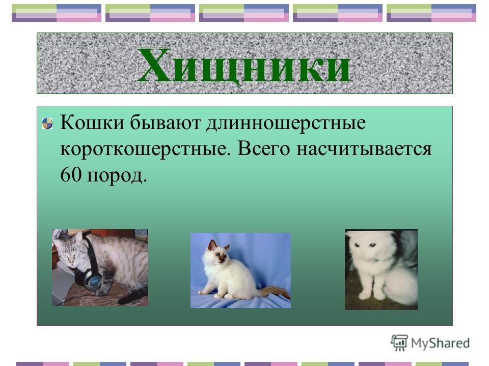 Хищник, растительноядное или всеядное? Корова, коза, кролик, овца, домашняя пчела. Собака, курица, утка. Кошка.