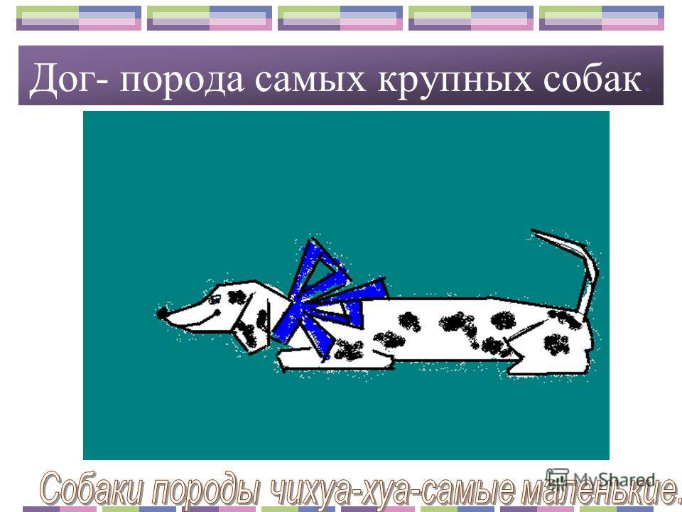 В нашей области разводят коров холмогорской породы. Корми корову сытнее, молоко будет жирнее. Коровы бывают мясные и молочные. В Архангельской области разводят коров холмогорской породы.