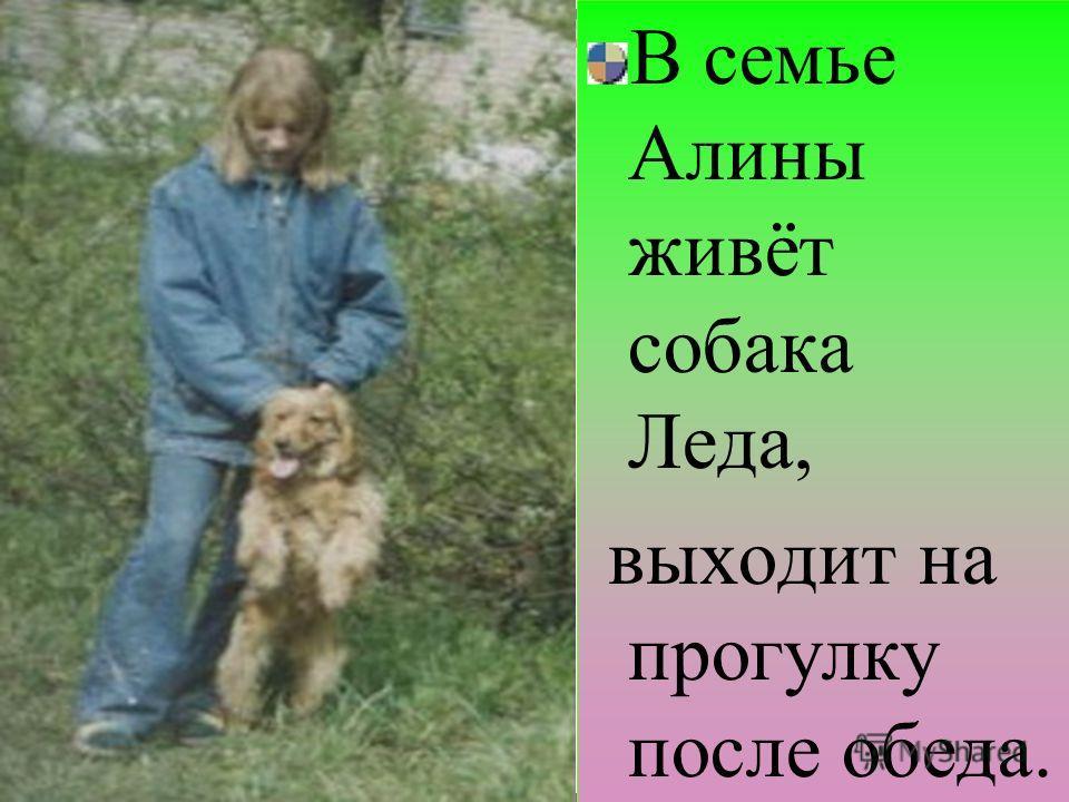 На даче за хозяина Юлин пёс Тимошка. Вот он решил прогуляться немножко.