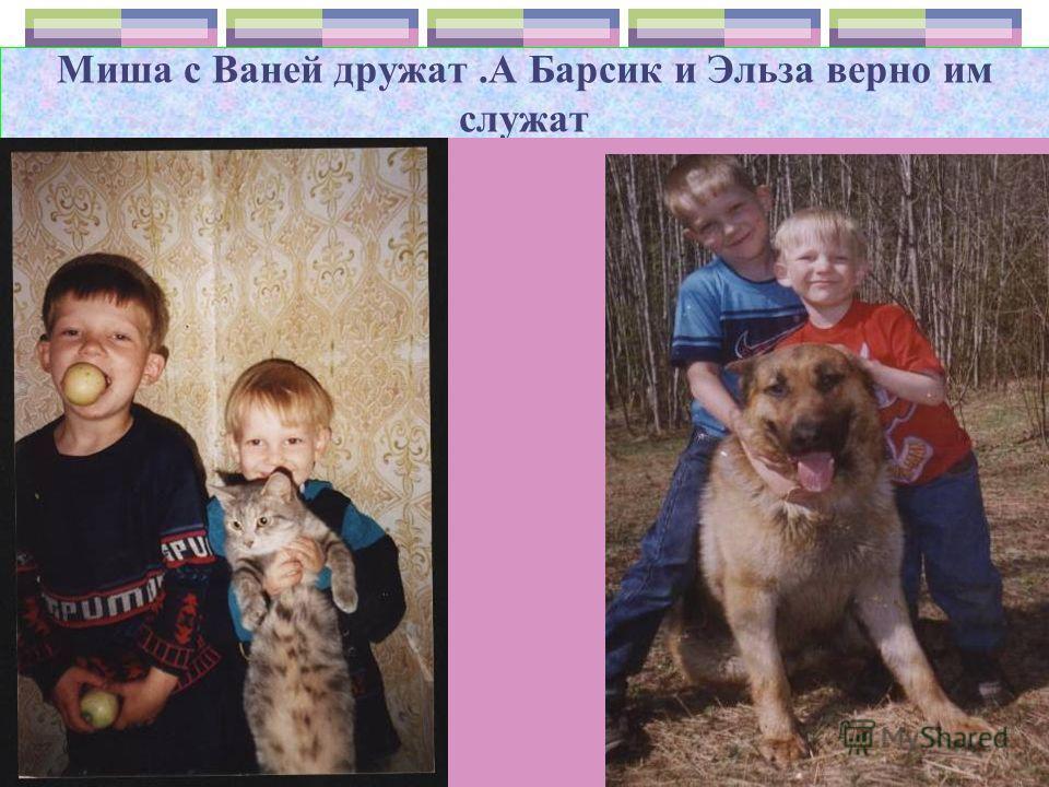 В семье Алины живёт собака Леда, выходит на прогулку после обеда.
