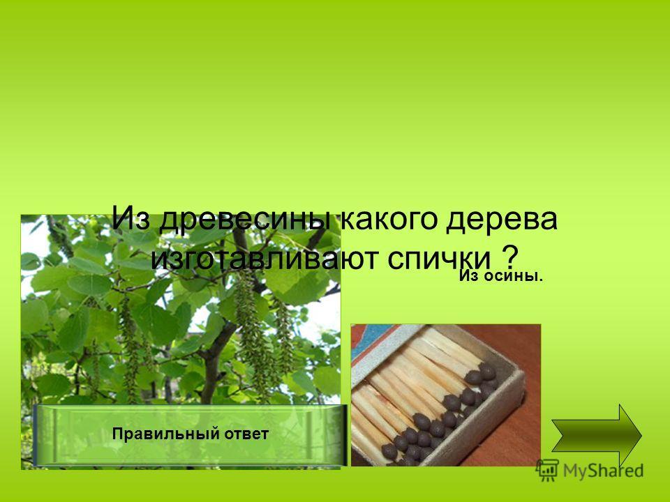 Из древесины какого дерева изготавливают спички ? Правильный ответ Из осины.