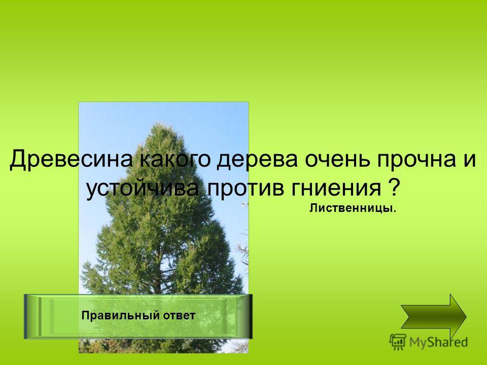Древесина какого дерева очень прочна и устойчива против гниения ? Правильный ответ Лиственницы.