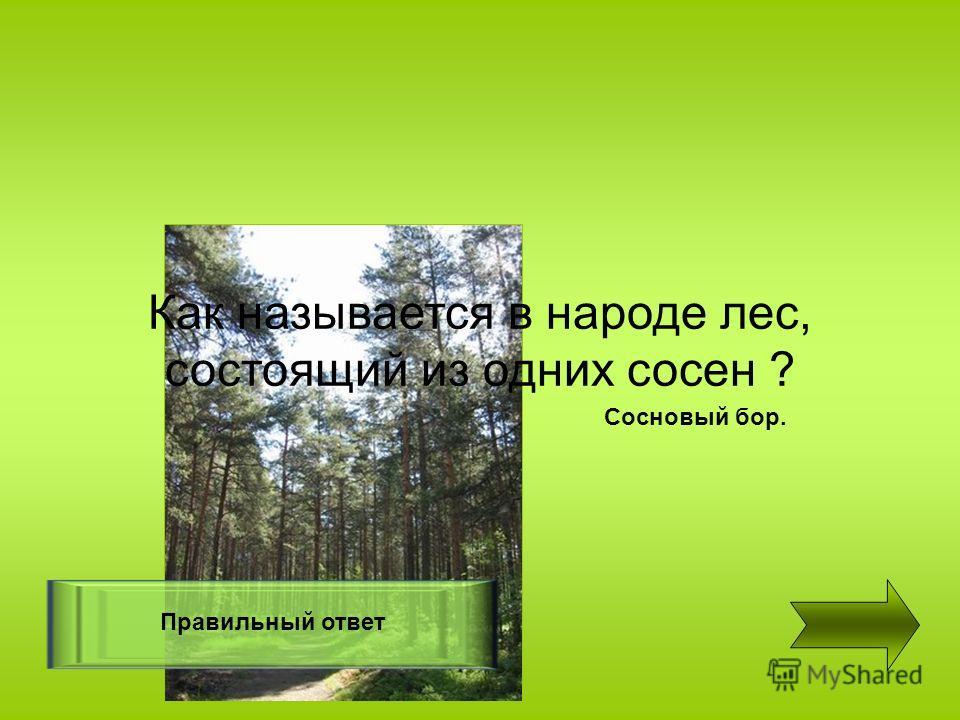 Правильный ответ Сосновый бор. Как называется в народе лес, состоящий из одних сосен ?