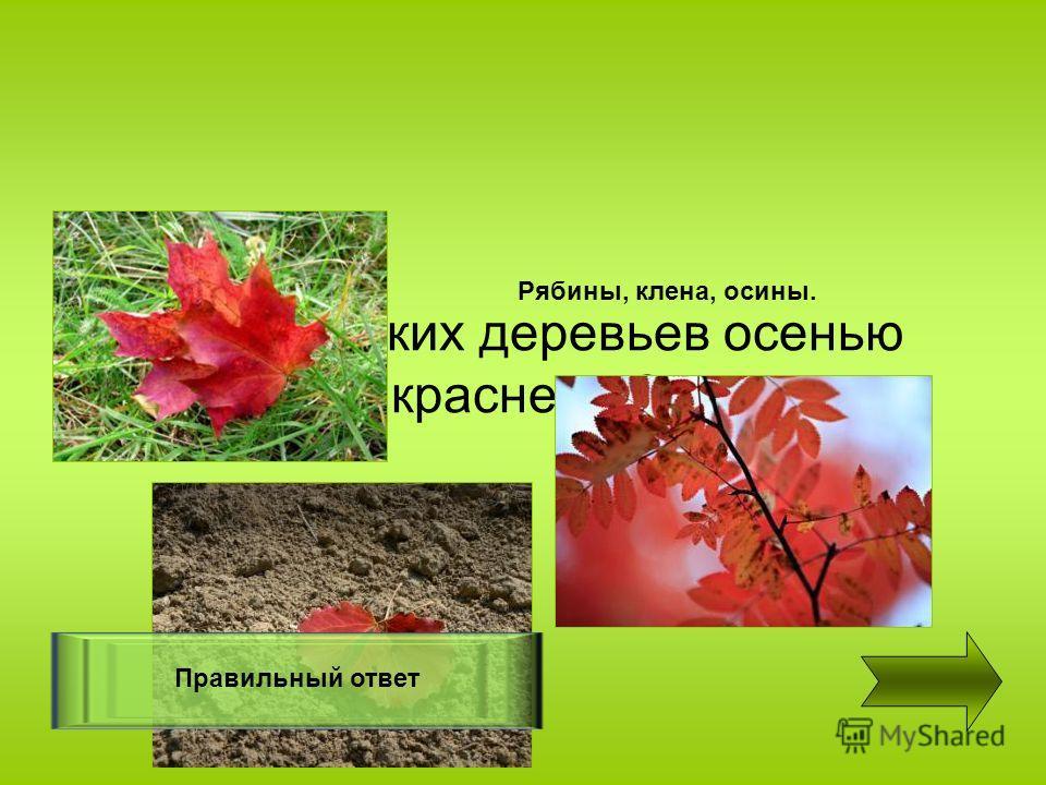 Листья каких деревьев осенью краснеют ? Правильный ответ Рябины, клена, осины.