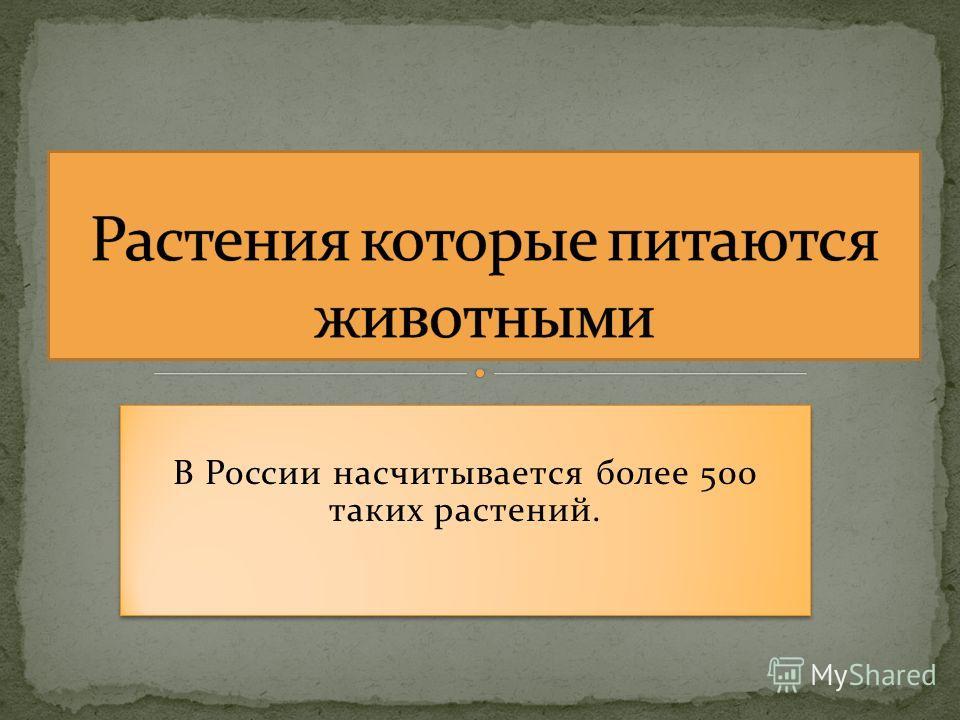 В России насчитывается более 500 таких растений. В России насчитывается более 500 таких растений.