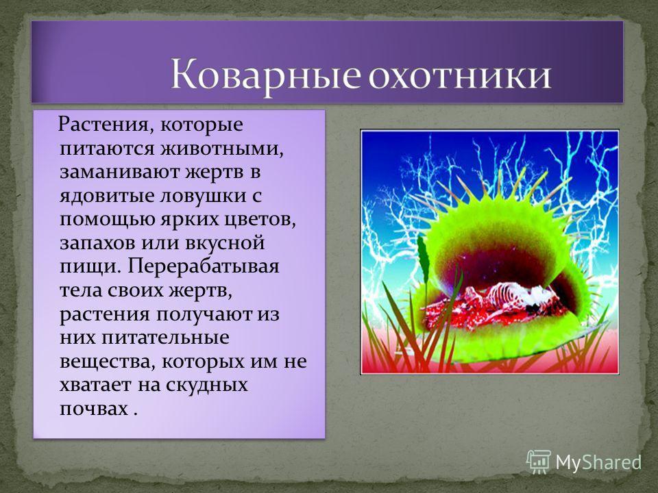 Растения, которые питаются животными, заманивают жертв в ядовитые ловушки с помощью ярких цветов, запахов или вкусной пищи. Перерабатывая тела своих жертв, растения получают из них питательные вещества, которых им не хватает на скудных почвах.