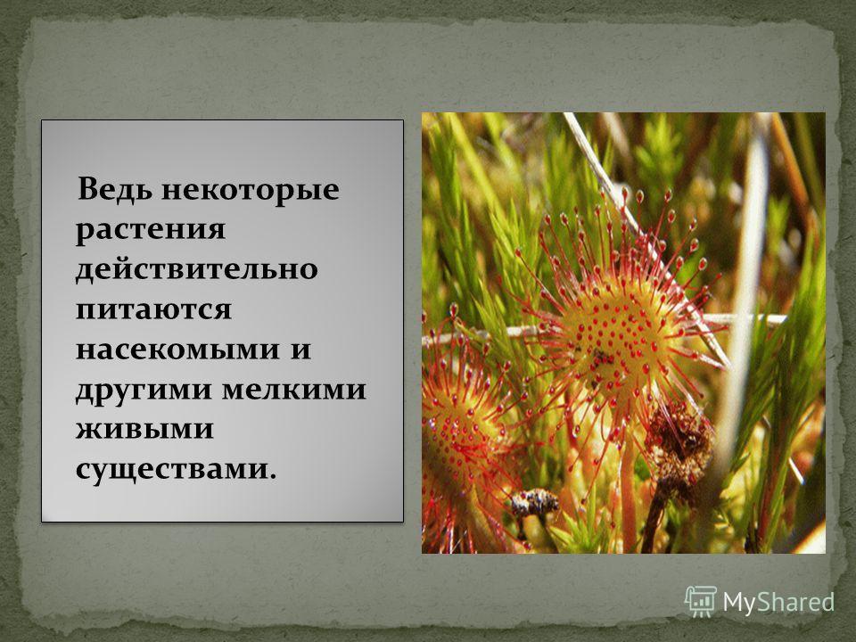 Ведь некоторые растения действительно питаются насекомыми и другими мелкими живыми существами.