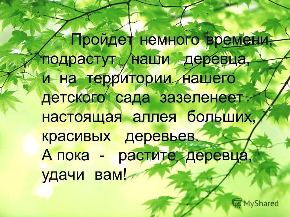 Пройдет немного времени, подрастут наши деревца, и на территории нашего детского сада зазеленеет настоящая аллея больших, красивых деревьев. А пока - растите деревца, удачи вам!
