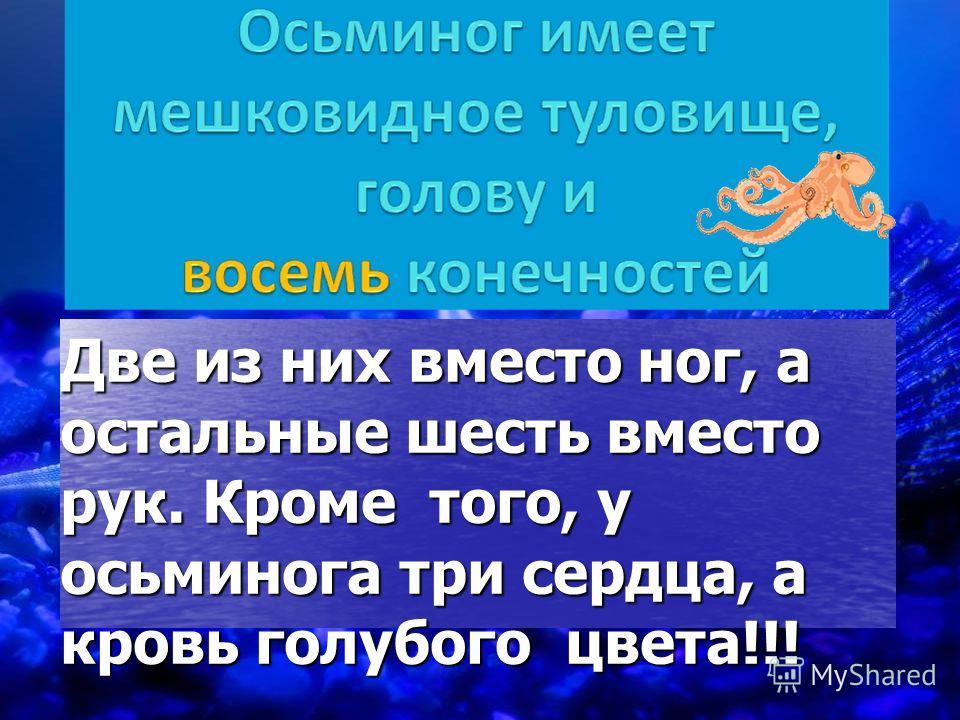 Две из них вместо ног, а остальные шесть вместо рук. Кроме того, у осьминога три сердца, а кровь голубого цвета!!!