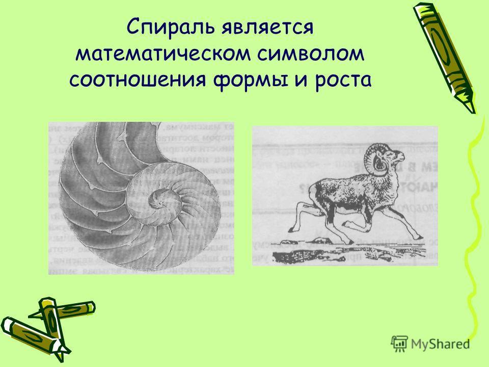 Спираль является математическом символом соотношения формы и роста
