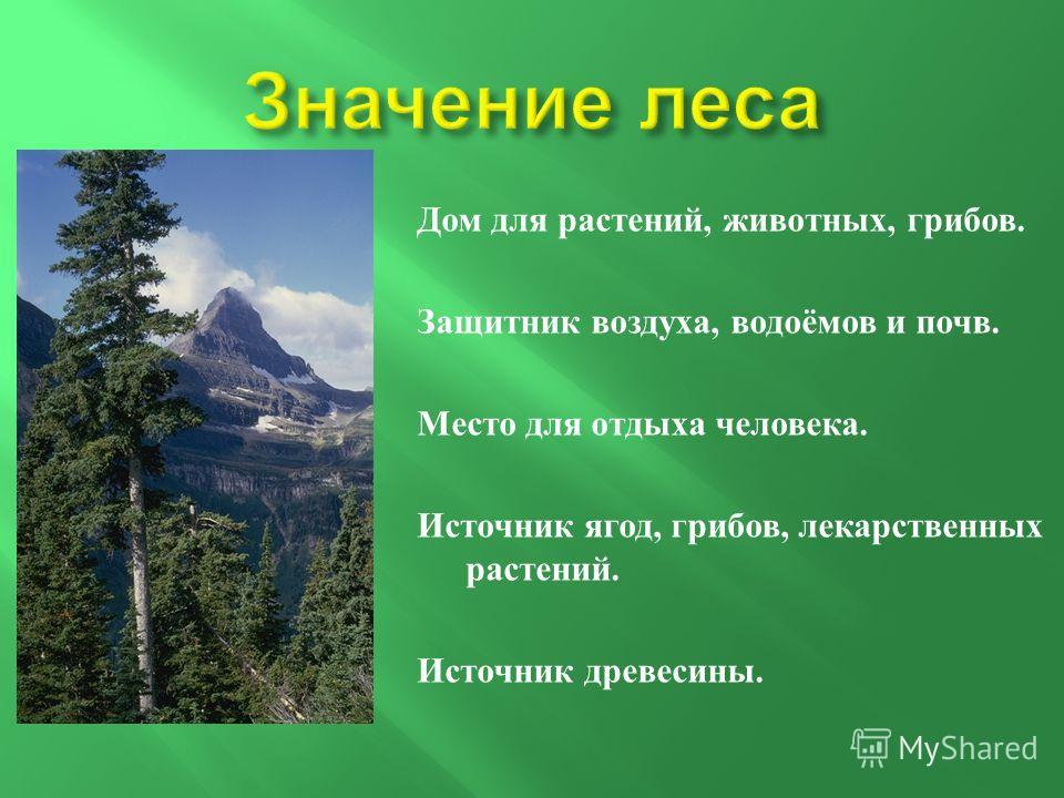 Дом для растений, животных, грибов. Защитник воздуха, водоёмов и почв. Место для отдыха человека. Источник ягод, грибов, лекарственных растений. Источник древесины.