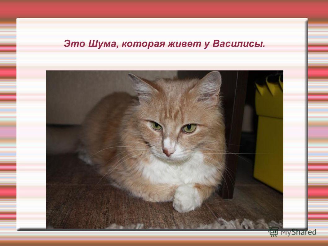 Это Шума, которая живет у Василисы.