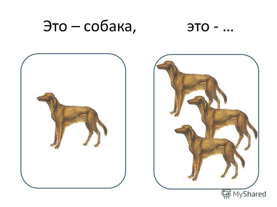 Это – собака, это - …