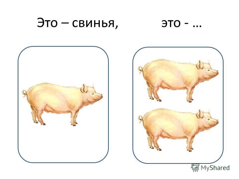 Это – свинья, это - …