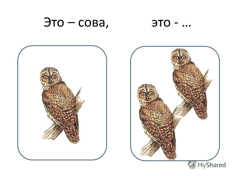 Это – сова, это - …