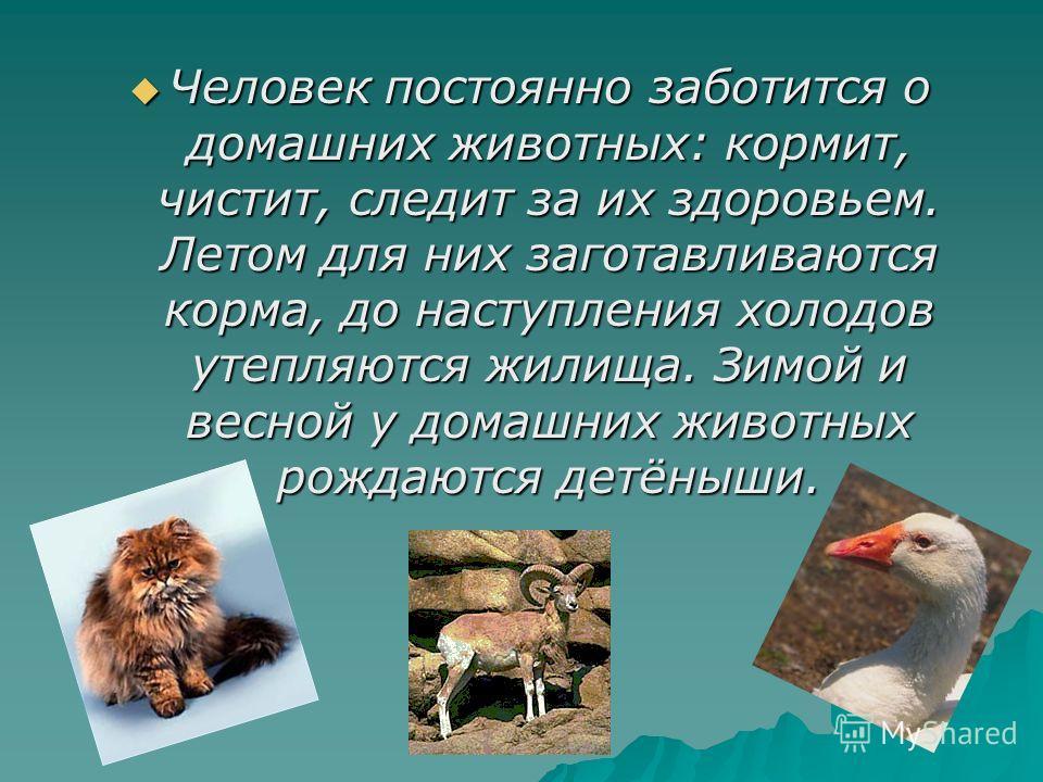 Человек постоянно заботится о домашних животных: кормит, чистит, следит за их здоровьем. Летом для них заготавливаются корма, до наступления холодов утепляются жилища. Зимой и весной у домашних животных рождаются детёныши. Человек постоянно заботится