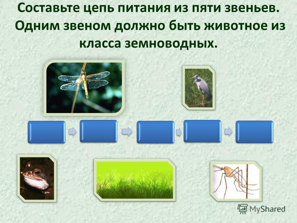 Составьте цепь питания из пяти звеньев. Одним звеном должно быть животное из класса земноводных.