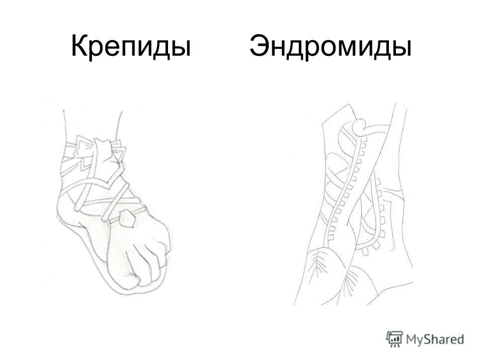 Крепиды Эндромиды