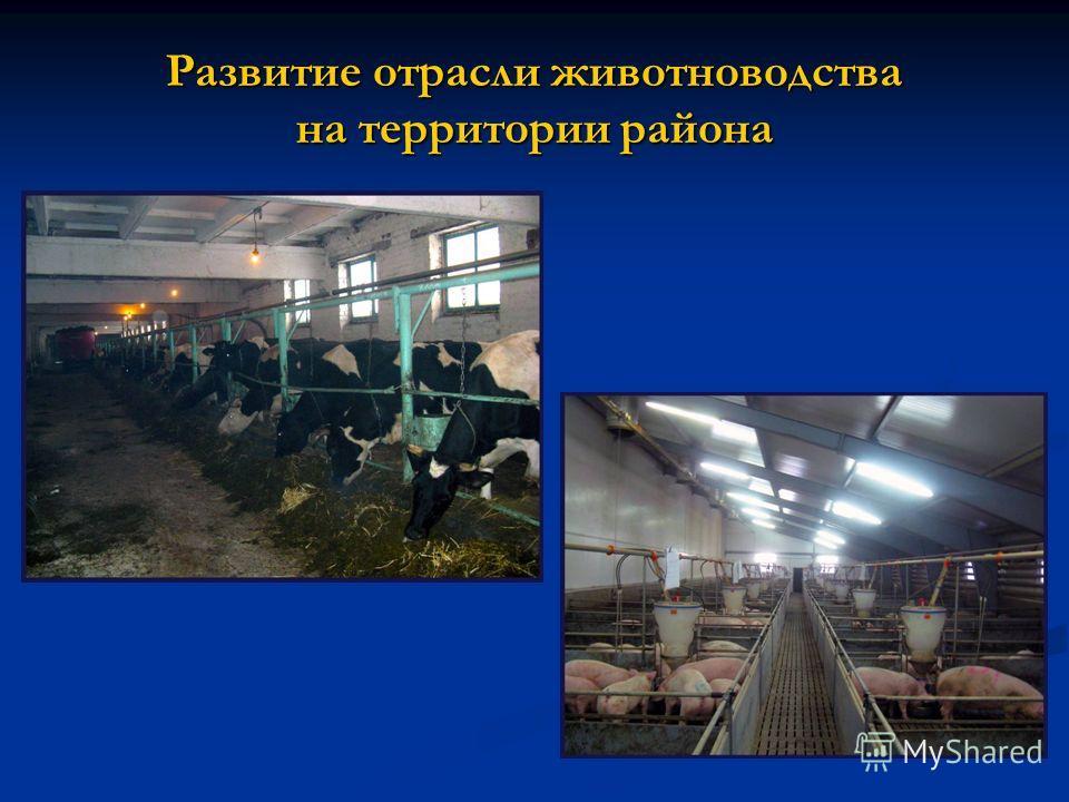 Развитие отрасли животноводства на территории района