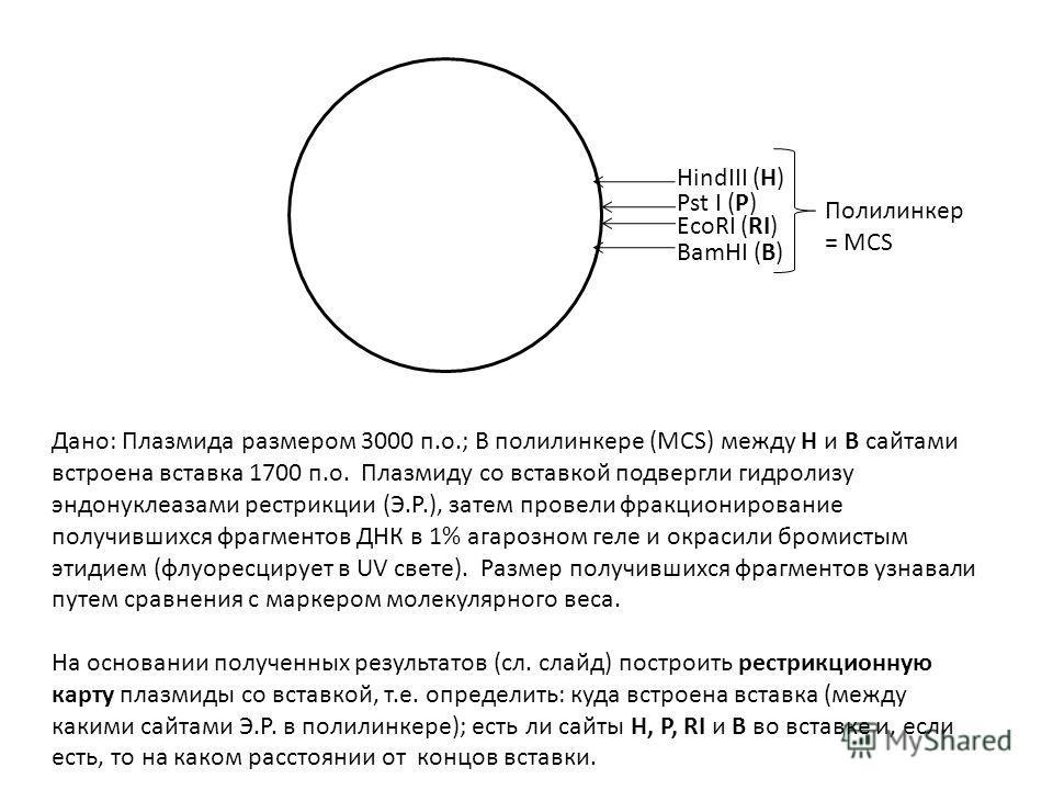 HindIII (H) Pst I (P) EcoRI (RI) BamHI (B) Дано: Плазмида размером 3000 п.о.; В полилинкере (MCS) между H и B сайтами встроена вставка 1700 п.о. Плазмиду со вставкой подвергли гидролизу эндонуклеазами рестрикции (Э.Р.), затем провели фракционирование