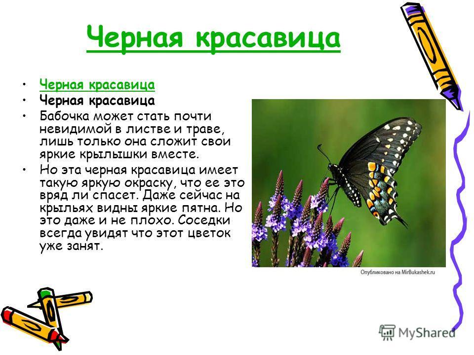 Черная красавица Бабочка может стать почти невидимой в листве и траве, лишь только она сложит свои яркие крылышки вместе. Но эта черная красавица имеет такую яркую окраску, что ее это вряд ли спасет. Даже сейчас на крыльях видны яркие пятна. Но это д