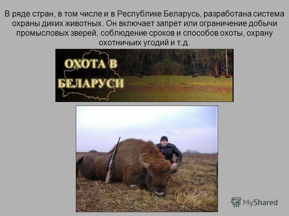 В ряде стран, в том числе и в Республике Беларусь, разработана система охраны диких животных. Он включает запрет или ограничение добычи промысловых зверей, соблюдение сроков и способов охоты, охрану охотничьих угодий и т.д.