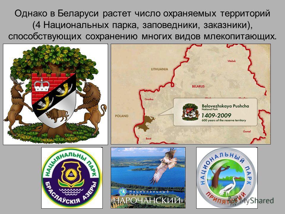 Однако в Беларуси растет число охраняемых территорий (4 Национальных парка, заповедники, заказники), способствующих сохранению многих видов млекопитающих.