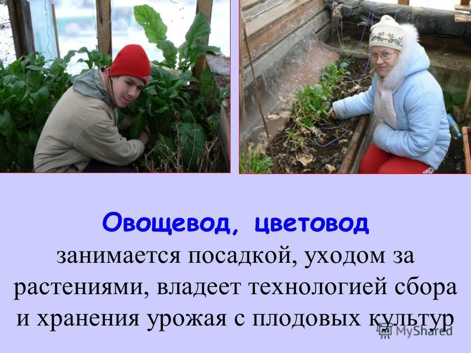 Овощевод, цветовод занимается посадкой, уходом за растениями, владеет технологией сбора и хранения урожая с плодовых культур