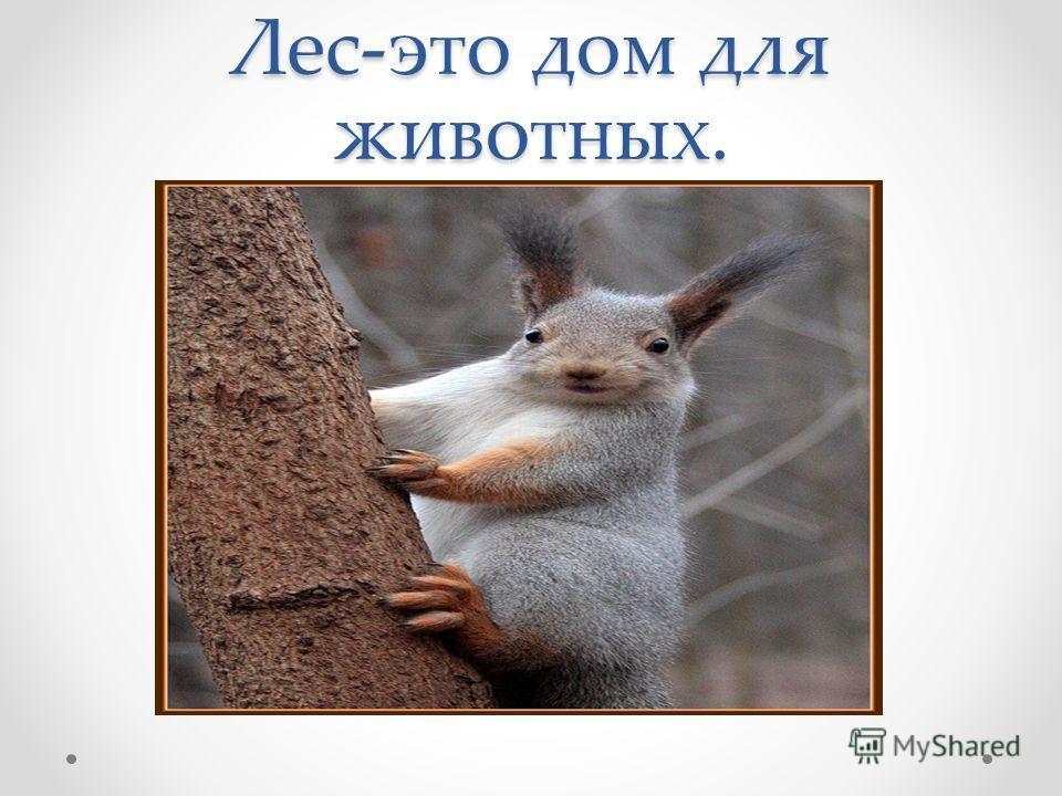 Лес-это дом для животных.