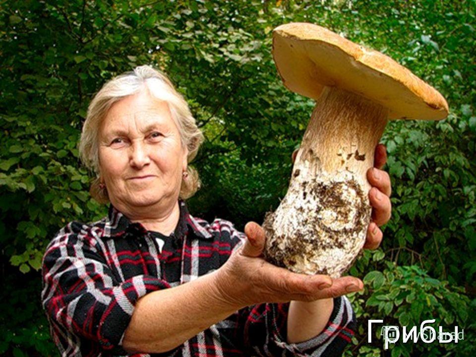 в чите где можно собирать грибыуже рублей Бизнес