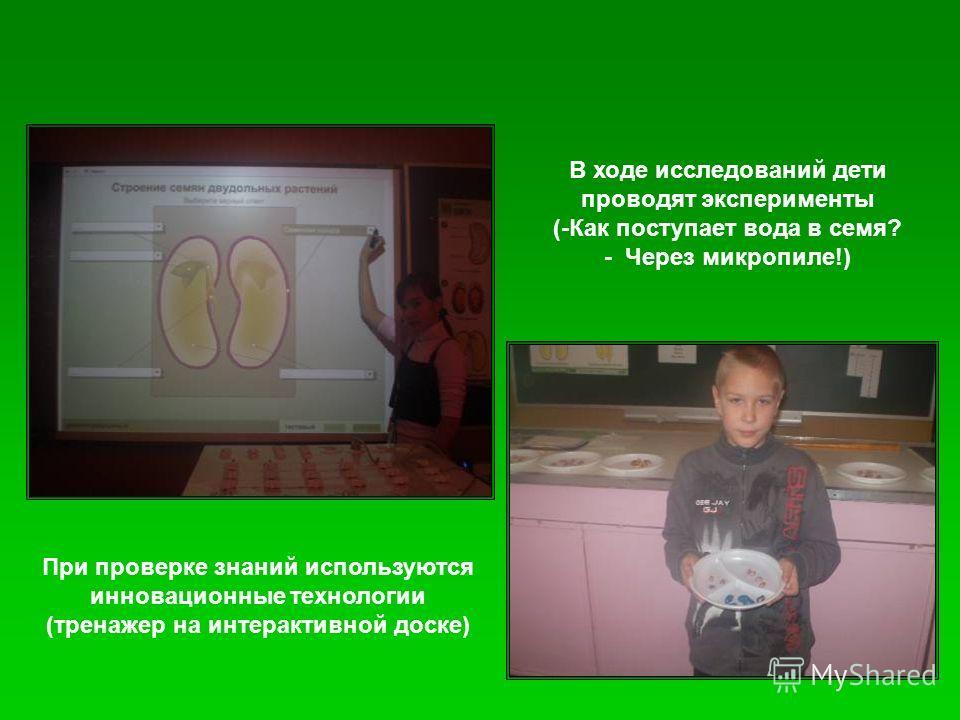 При проверке знаний используются инновационные технологии (тренажер на интерактивной доске) В ходе исследований дети проводят эксперименты (-Как поступает вода в семя? - Через микропиле!)