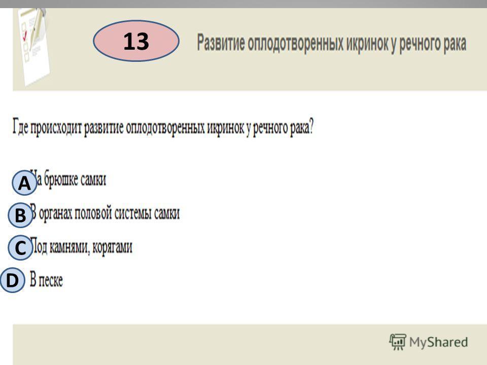 13 А B С D
