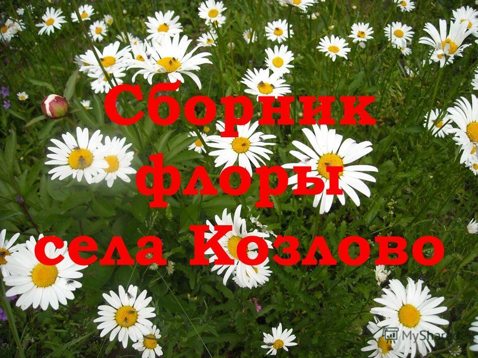 Сборник флоры села Козлово