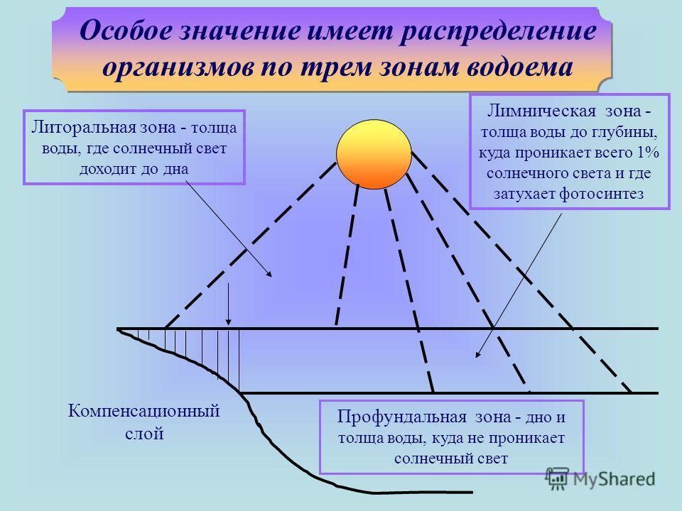 Особое значение имеет распределение организмов по трем зонам водоема Литоральная зона - толща воды, где солнечный свет доходит до дна Лимническая зона - толща воды до глубины, куда проникает всего 1% солнечного света и где затухает фотосинтез Компенс