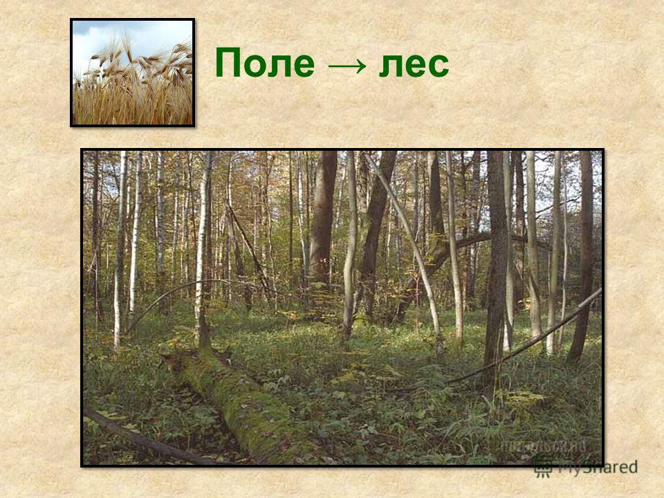Поле лес