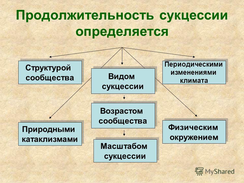 Продолжительность сукцессии определяется Структурой сообщества Структурой сообщества Видом сукцессии Видом сукцессии Природными катаклизмами Природными катаклизмами Физическим окружением Физическим окружением Периодическими изменениями климата Период