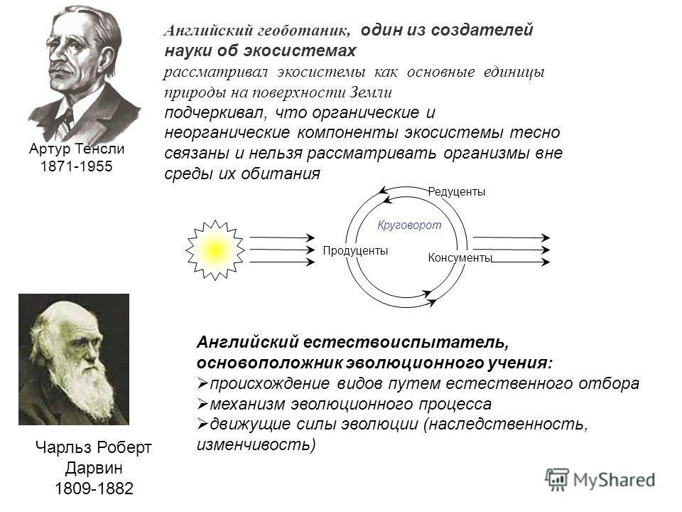 Артур Тенсли 1871-1955 Английский геоботаник, один из создателей науки об экосистемах рассматривал экосистемы как основные единицы природы на поверхности Земли подчеркивал, что органические и неорганические компоненты экосистемы тесно связаны и нельз